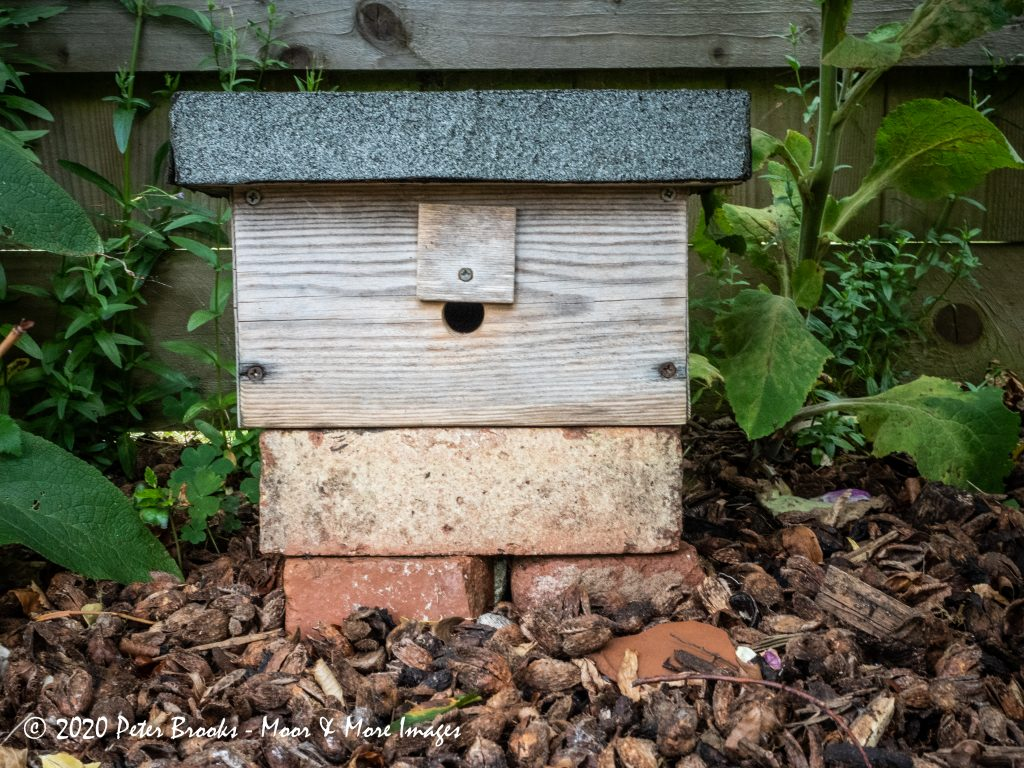 Bumble Bee Home