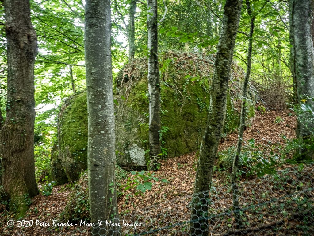 Image of rocks in woodland