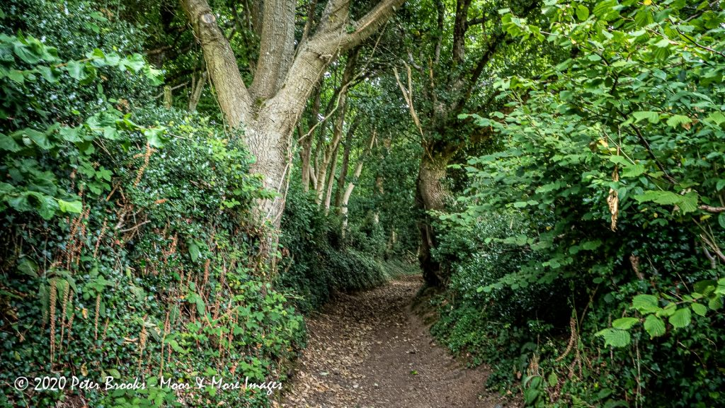 Image of path going uphill through woodland