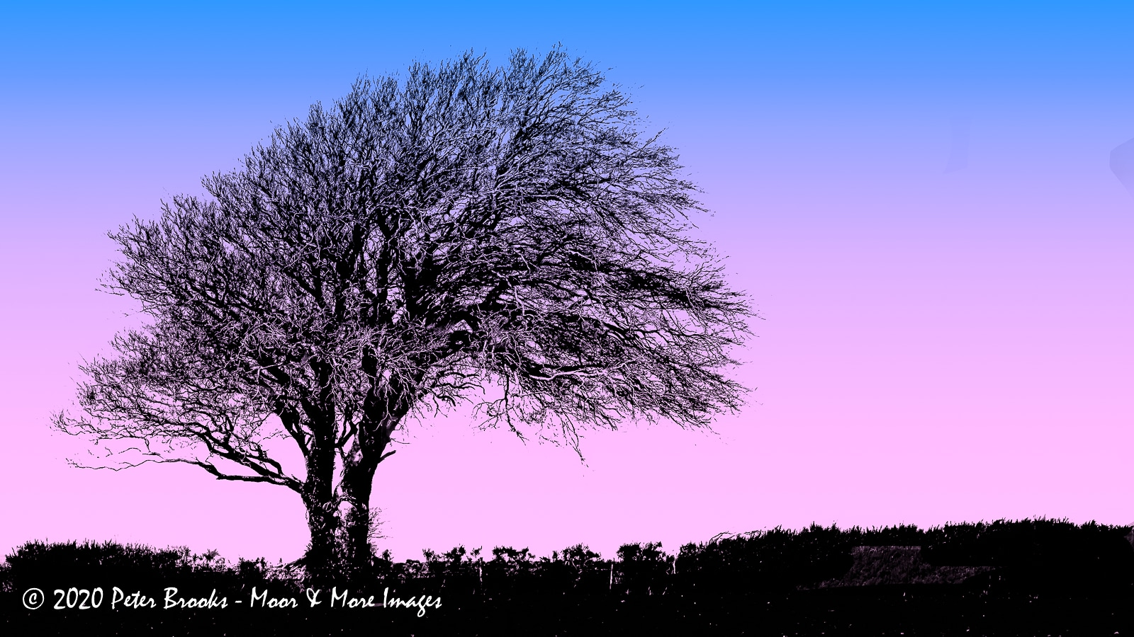 Image of a tree near Heltor, Darmoor, in the style of a linocut