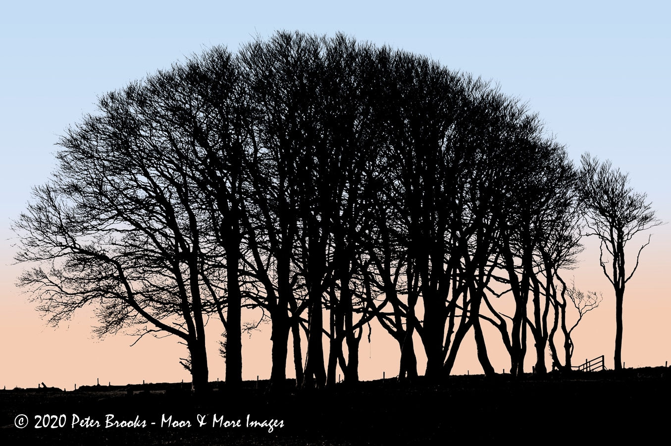 Image of trees at Powder Mills, Dartmoor, in the style of a linocut