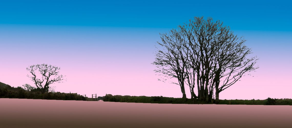 Image of trees at Heltor, Dartmoor, in the style of a linocut.