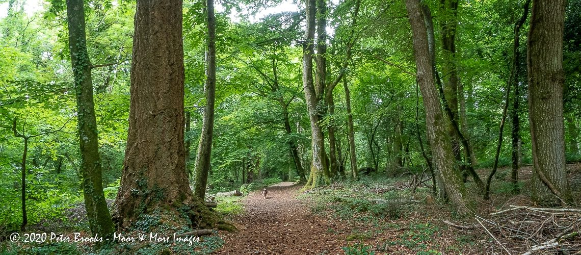 Image of Higher Knowle Wood